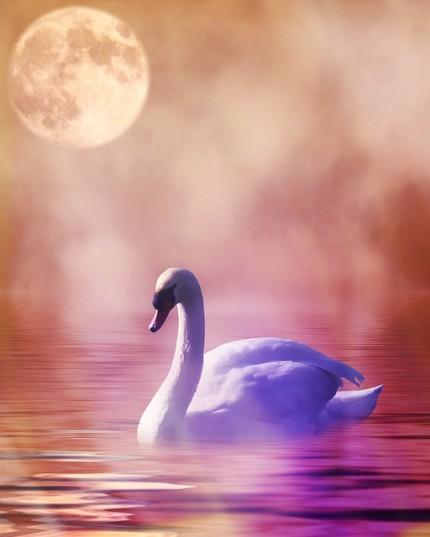 Schwan im Nebel und im Mondschein