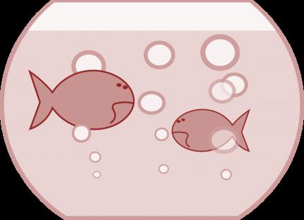 Zwei Goldfische im Glas