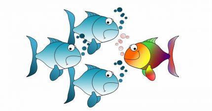 Fisch schwimmt gegen den Strom