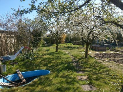 Die Obstbäume im Frühling